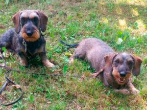 Zuchthündinnen Nayla und Cleo
