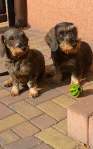 Nayla und Cleo
