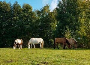 Die ausgebrochenen Pferde hatten unsere Planung auf den Kopf gestellt!